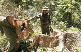 """Một năm đóng cửa rừng Tây Nguyên: Rừng vẫn tiếp tục """"chảy máu"""""""