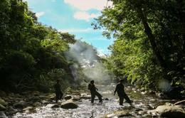 Quảng Nam ngăn chặn hàng chục đường dây săn bắt thú rừng