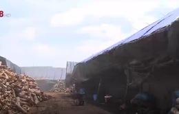 Ô nhiễm môi trường từ các lò đốt than tại Đăk Lăk