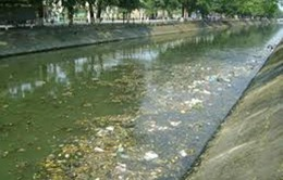 Ô nhiễm nguồn nước từ các trại lợn ở Đồng Nai