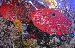 Khai mạc Lễ hội hoa anh đào 2017: Vườn hoa tượng đài Lý Thái Tổ rực rỡ sắc hoa