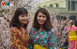 Hàng trăm người dân đội mưa ngắm hoa anh đào tại Hà Nội