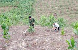 Quảng Nam: Tăng cường phát triển kinh tế rừng
