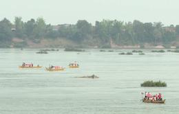 Độc đáo du lịch sinh thái xem cá heo ở Campuchia