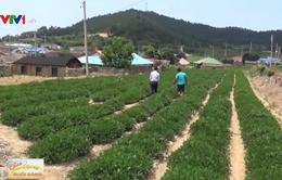Trải nghiệm du lịch trang trại ở Hàn Quốc