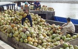 Thủ phủ dừa Bến Tre phải nhập khẩu dừa để chế biến