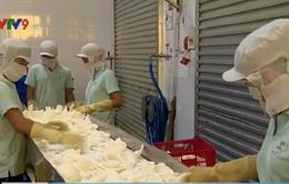 Thiếu nguyên liệu, các nhà máy chế biến dừa tại ĐBSCL gặp khó