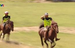 Giải đua ngựa truyền thống ở Yên Bái