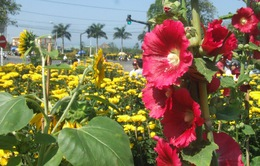 Phú Yên khai mạc đường hoa Xuân Đinh Dậu 2017
