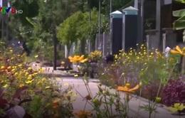 Đường làng có hoa - Mô hình làm đẹp đường nông thôn mới