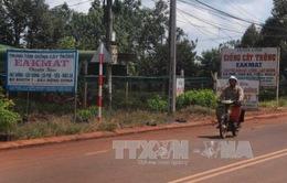 """Đắk Lắk: Kiến nghị xử lý việc mạo danh tên gọi """"Ea Kmát"""" trong kinh doanh giống cây trồng"""