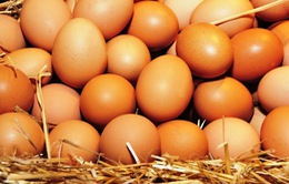 Hàn Quốc hỗ trợ 50% chi phí vận chuyển nhập khẩu trứng