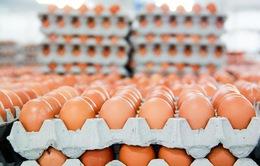 Châu Âu điều tra vụ trứng nhiễm thuốc trừ sâu
