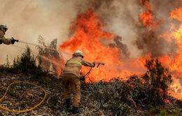 Thảm họa cháy rừng ở Bồ Đào Nha, 62 người thiệt mạng