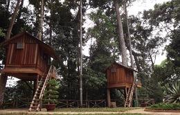 Độc đáo nhà nghỉ trên cây ở Lâm Đồng