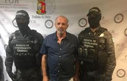 Italy bắt giữ trùm mafia nhờ Facebook