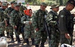 Lực lượng FARC tại Colombia giải giáp vũ khí