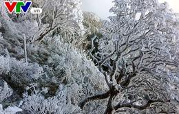 Chùm ảnh: Tuyết và băng giá phủ trắng Fansipan