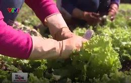 Thay đổi tư duy và cách làm nông nghiệp an toàn của người nông dân