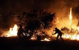 Cháy rừng nghiêm trọng tại Chile, 3 lính cứu hỏa thiệt mạng
