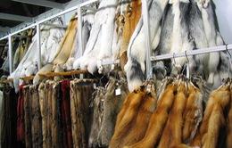 Thời trang và các vấn đề liên quan tới quyền động vật