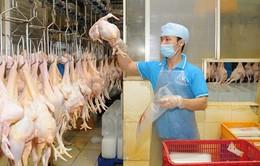 Sản phẩm từ gà Việt Nam sắp xuất khẩu sang Nhật Bản