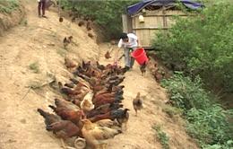 Hội Nông dân Lâm Đồng hỗ trợ hội viên xây dựng 307 mô hình kinh tế điểm