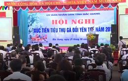 Xúc tiến tiêu thụ gà đồi Yên Thế, Bắc Giang