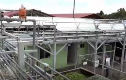 Khai thác năng lượng tái sinh từ xương rồng gai