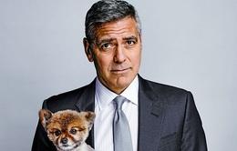 George Clooney phấn khích mong con chào đời