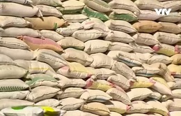 Không xuất khẩu được gạo chính ngạch, DN đứng trước nguy cơ đóng cửa