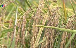 DN gặp khó để duy trì mô hình sản xuất nông sản sạch, hữu cơ