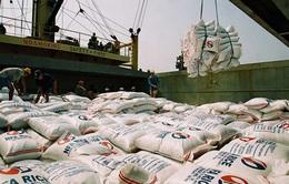 Việt Nam tham gia phiên đấu thầu nhập 250.000 tấn gạo của Philippines