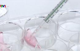 Nghiên cứu tế bào gốc của Việt Nam bước đầu có kết quả
