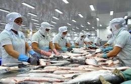 Giá cá tra trong nước ổn định ở mức cao