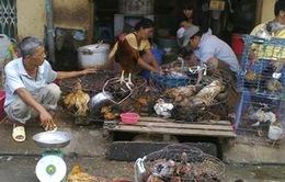 Cúm gia cầm -  Nỗi lo từ thói quen giết mổ gia cầm sống tại chợ