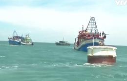 """Quảng Trị bắt hai tàu cá Kiên Giang khai thác hải sản """"tận diệt"""" ven bờ"""