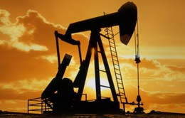 Giá dầu có thể về mốc 30 USD/thùng nếu OPEC không cẩn trọng
