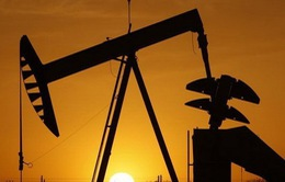 Giá dầu giảm mạnh xuống mức thấp nhất từ đầu năm