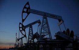 Nguồn cung phục hồi giữ giá dầu ổn định