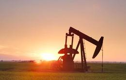 Giá dầu thô thế giới mất mạch tăng điểm