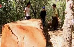Gia Lai kỷ luật cán bộ bịa chuyện bị cướp gỗ