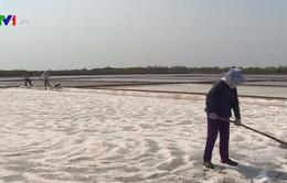 Giá muối hạt lên mức cao nhất 2.500 đồng/kg