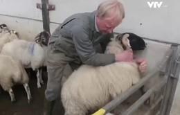 Phòng ngừa nạn trộm cắp gia súc ở Anh