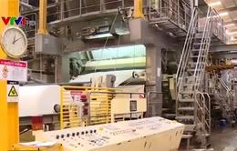 """""""Sốt"""" giấy cuộn carton do nhu cầu từ Trung Quốc tăng cao"""