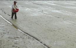 Phú Yên: Dứt điểm gieo sạ vụ lúa Đông Xuân 2016-2017 vào ngày 20/1