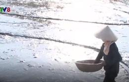 Tránh nắng nóng, nông dân Nghệ An cấy lúa lúc rạng sáng