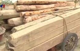 """Hà Tĩnh: """"Nóng"""" tình trạng vận chuyển gỗ trái phép"""
