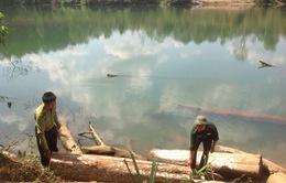 Gia Lai bắt giữ vụ khai thác, vận chuyển gỗ lậu