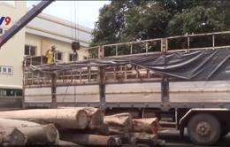 Đăk Lăk: Phát hiện 3 vụ vận chuyển gỗ lậu trong 1 ngày
